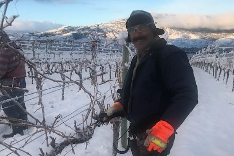 what happens in the vineyard in the winter?