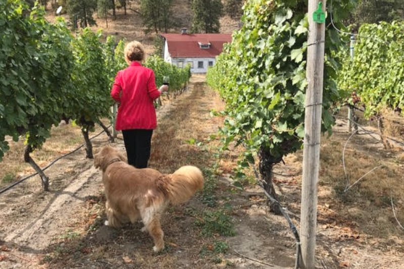 dogs in the vineyard wine and food event at SYL ranch